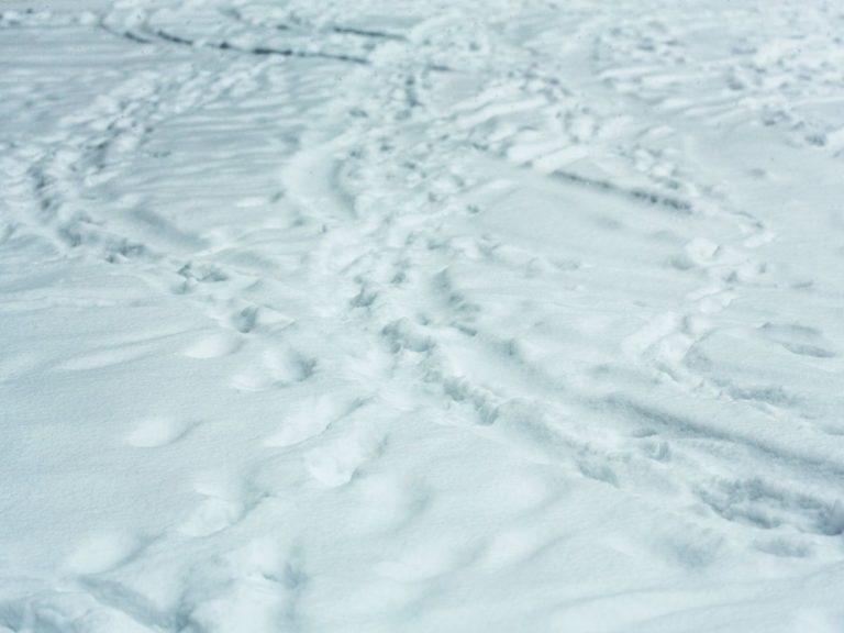 雪が降り積もった後の轍