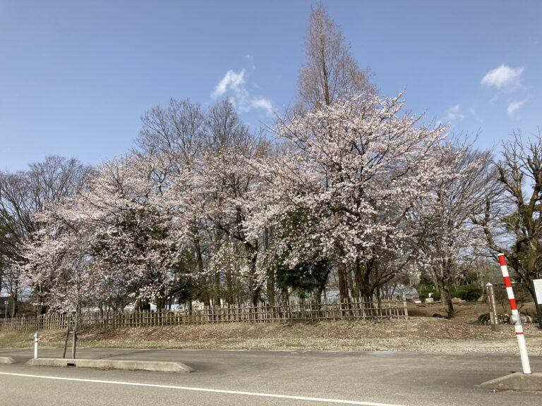 南砺市桜福野高校