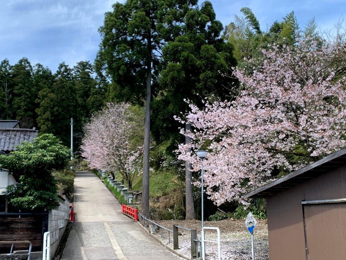 4月6日の安居寺へ行く坂の桜