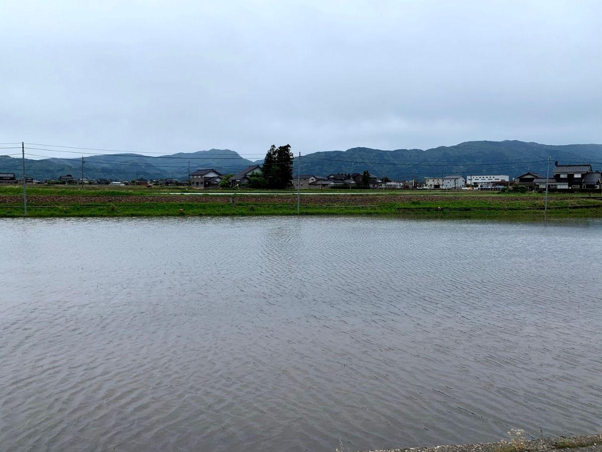 水が張られているだけの田んぼ