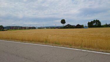 【6月になったよ】南砺市福野で、時候の挨拶の「麦秋」を感じてみたよ!