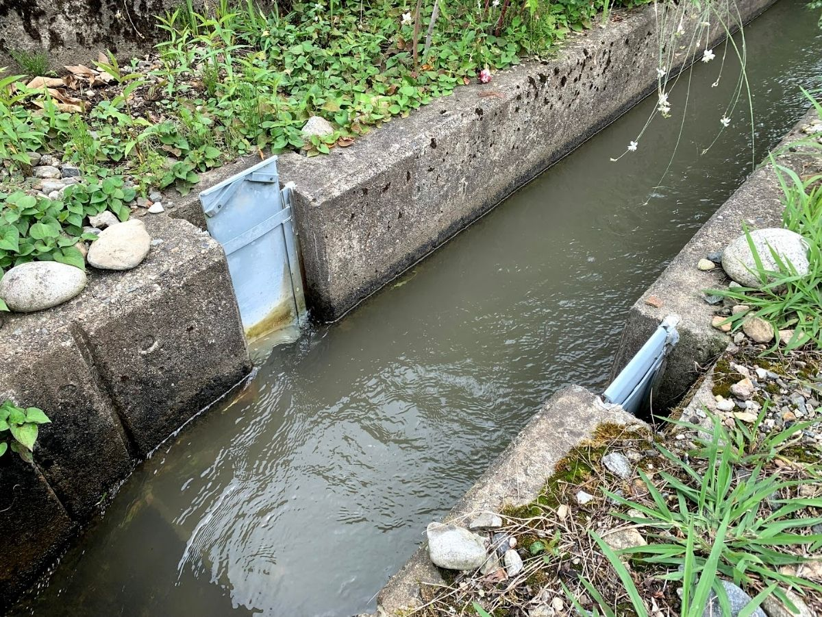 増水後の小川1