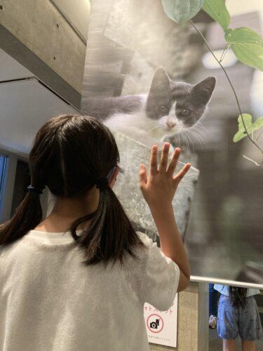 高岡市ミュゼふくおか カメラ館 2021 岩合光昭写真展
