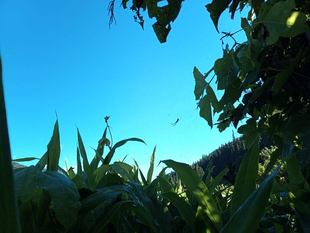 茗荷畑と空
